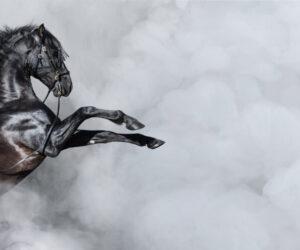 rearing black horse 1 e1590489686611