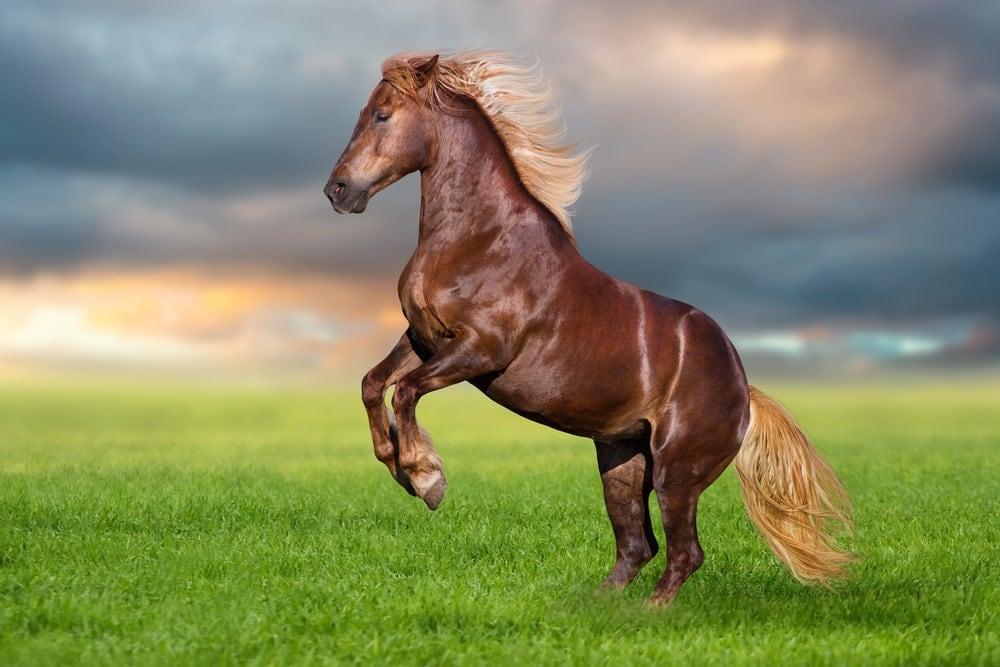 rearing horse wild