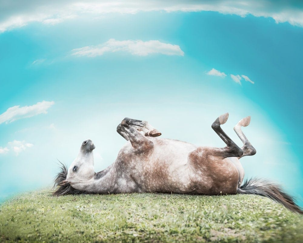 rolling happy horse
