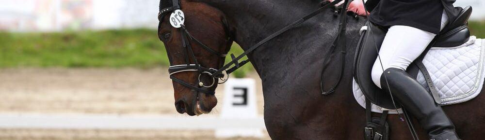 runnoing horse e1590595522166