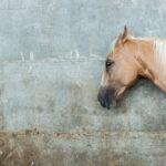 Diarrhea in Horses: Treatments & Info