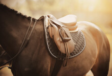 How Much Do Riding Saddles Cost?