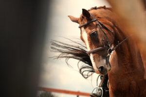 stubborn horse 1