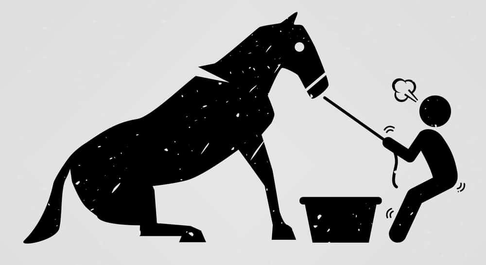 stubborn horse e1590490875400