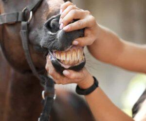 teeth checkup