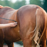 Symptoms & Stages of Pregnancy in Horses