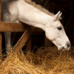 How Much Hay Does a Horse Eat?