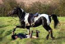 How to Safely Fall Off Your Horse
