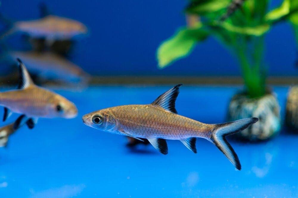 Bala Shark group e1591109420565