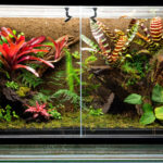 How to Create a Paludarium Tank
