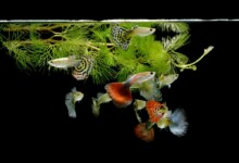 Guppy Grass Care Guide - Light Requirement & More