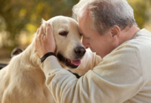 At What Age Do Labradors Calm Down?
