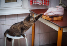 Can Cats Eat Raw Chicken?