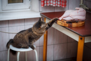 Can cats eat raw chicken