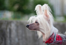 10 Best Hypoallergenic Dogs - Dogs That Don't Shed