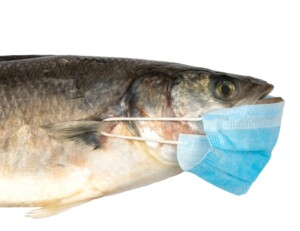 Do Fish Cough or Sneeze e1595709144478
