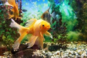Do Fish Eat Algae Which types eat algae