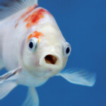Do Fish Recognize Owners?