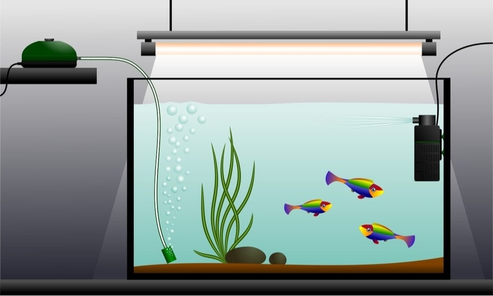 Do You need an Air Pump in your Aquarium