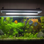 Do Aquariums Need Special Lights?
