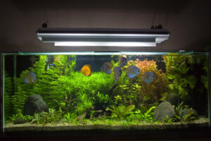 Do aquariums need special lights