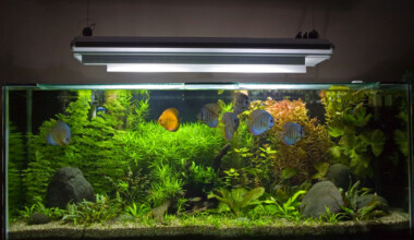 Do aquariums need special lights