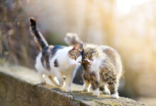 How Do Cats Communicate With Eachother?