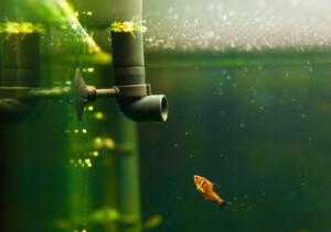 How Often Should I Change my Aquarium Filter