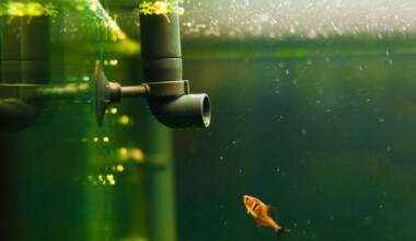 How Often Should I Change my Aquarium Filter