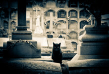 How Long Is a Cat's Memory?