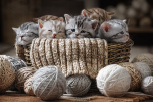 How many kittens can a cat have