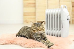 What temperature do cats like e1595443997112
