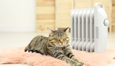 What temperature do cats like e1595443997112