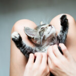 Why Do Cats Sleep Between Your Legs?