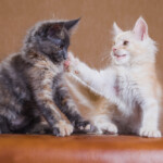 Why Do Cats Slap Each Other?