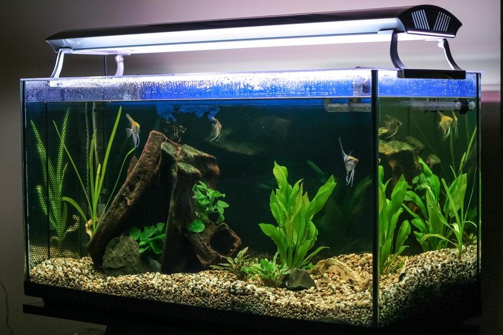aquarium with extra lights