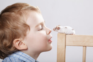 boy play with pet mouse