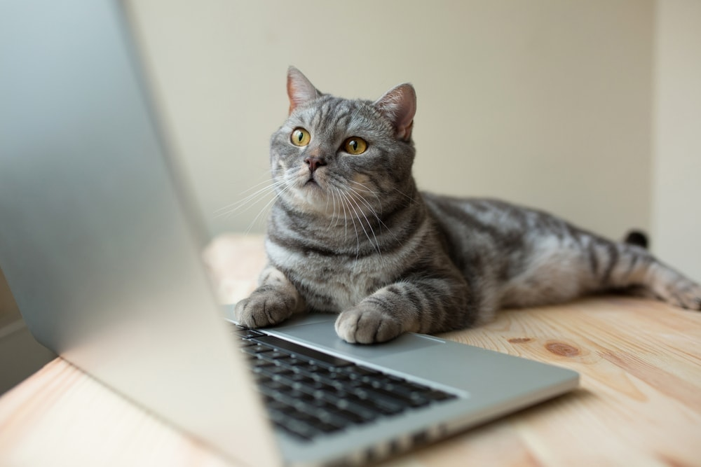 cat chatting in the internet