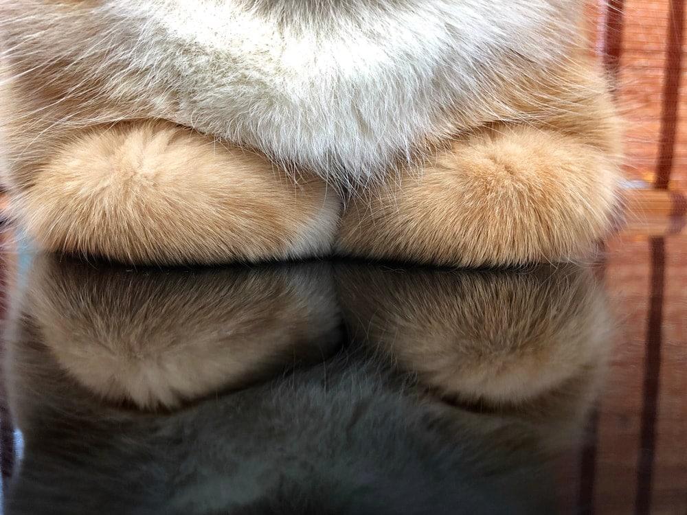 cat legs loaf