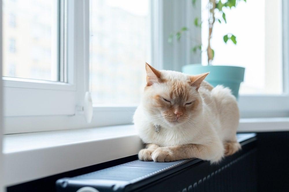 cat on heater