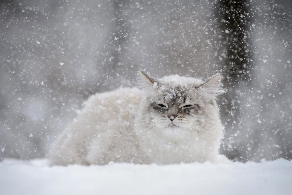 cat sleeps in snow