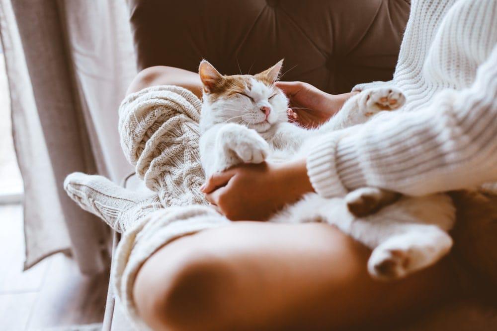 cat sleeps on lap