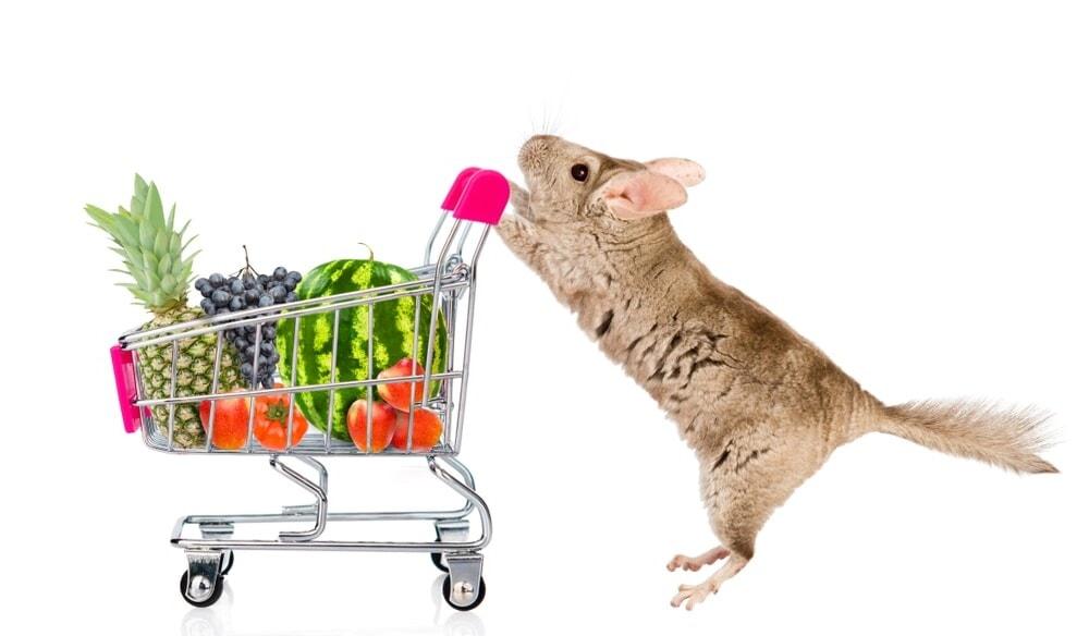 chinchilla goes shopping e1591970346314