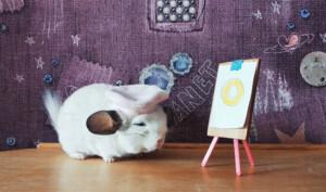 chinchilla the painter