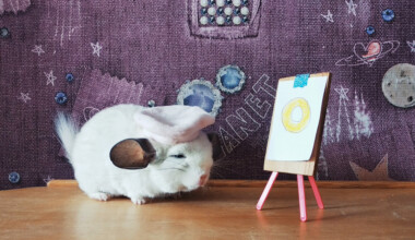 chinchilla the painter