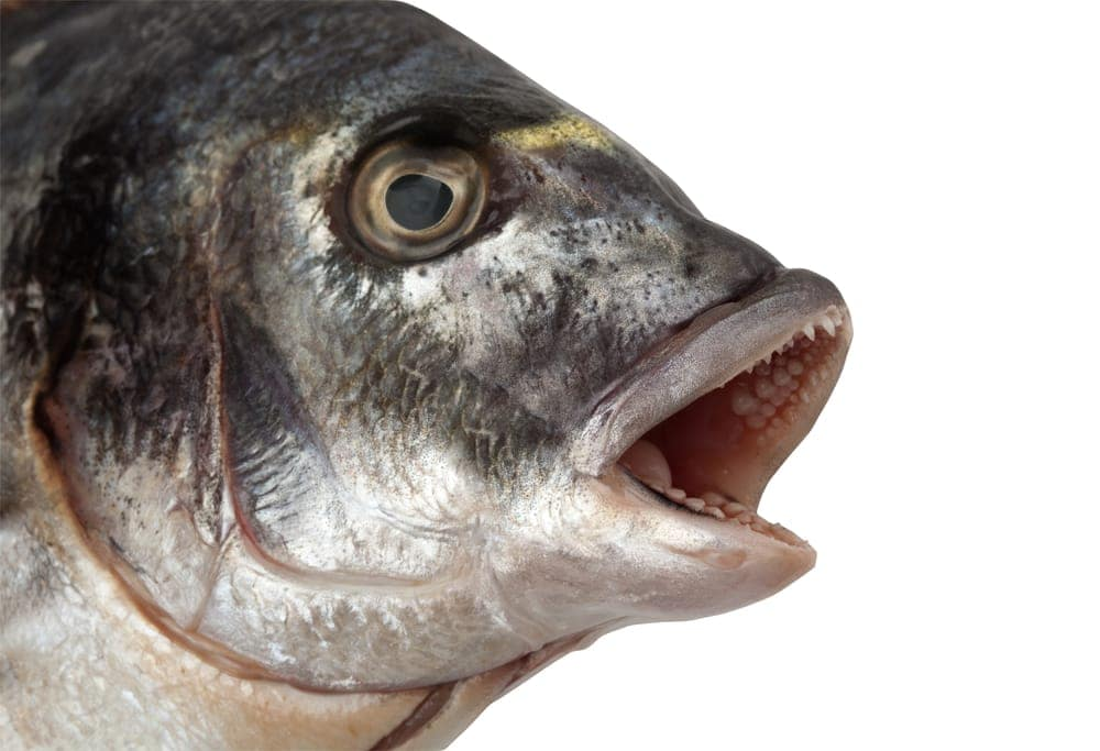 coughing fish