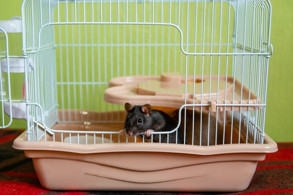 cute rAT cage