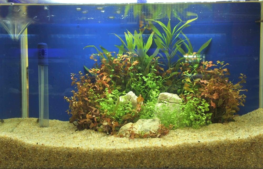 gravel in aquarium