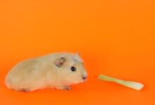 Can Guinea Pigs Eat Celery?