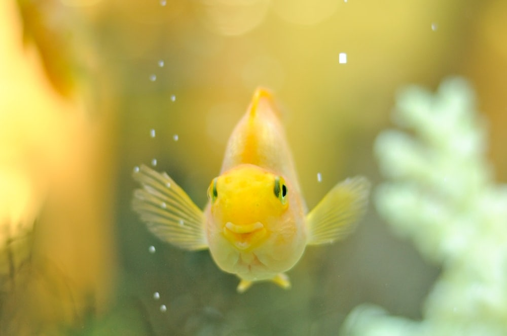 happy fish seing owner